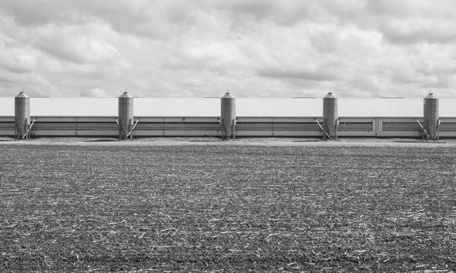 Cooper Farms in Versailles, OH, photographed by Andrew Broering '22.
