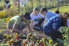 Day of Service Fall 087 copy