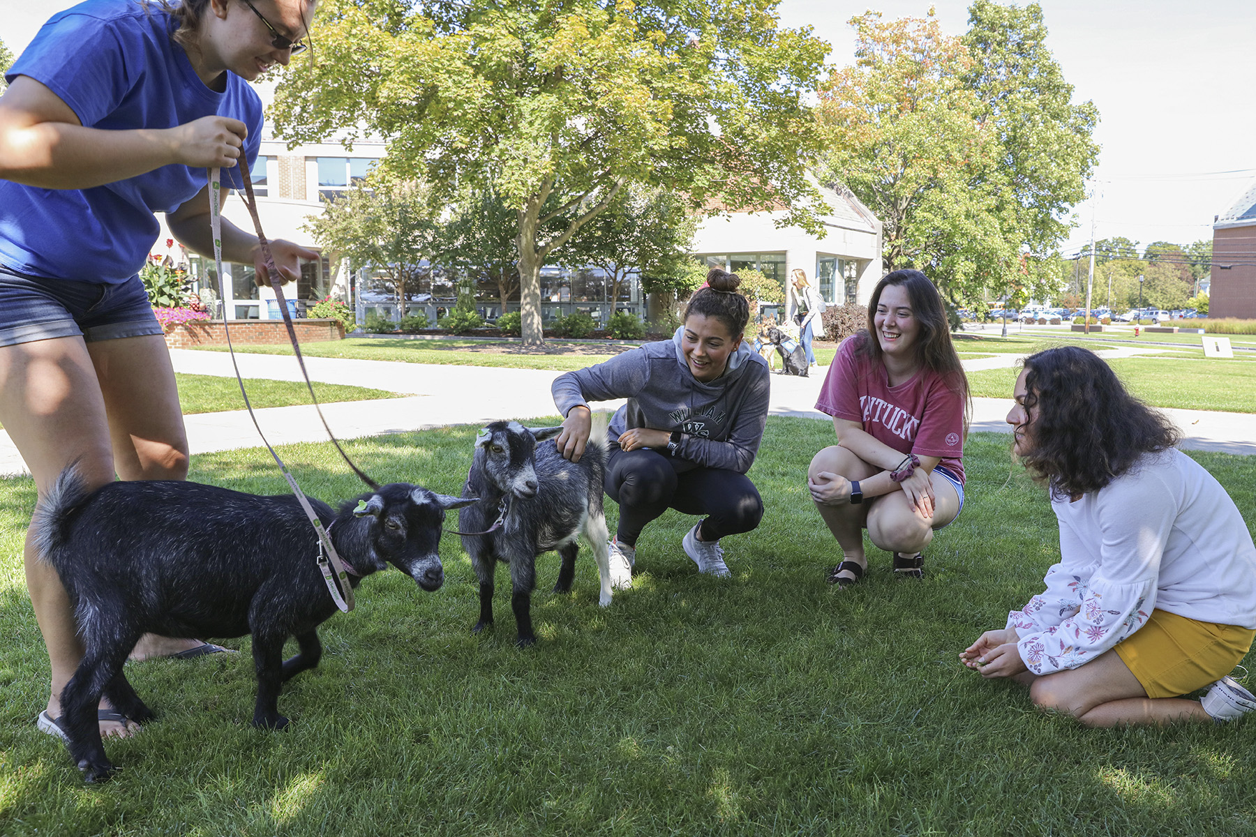 Goats on Campus-00061