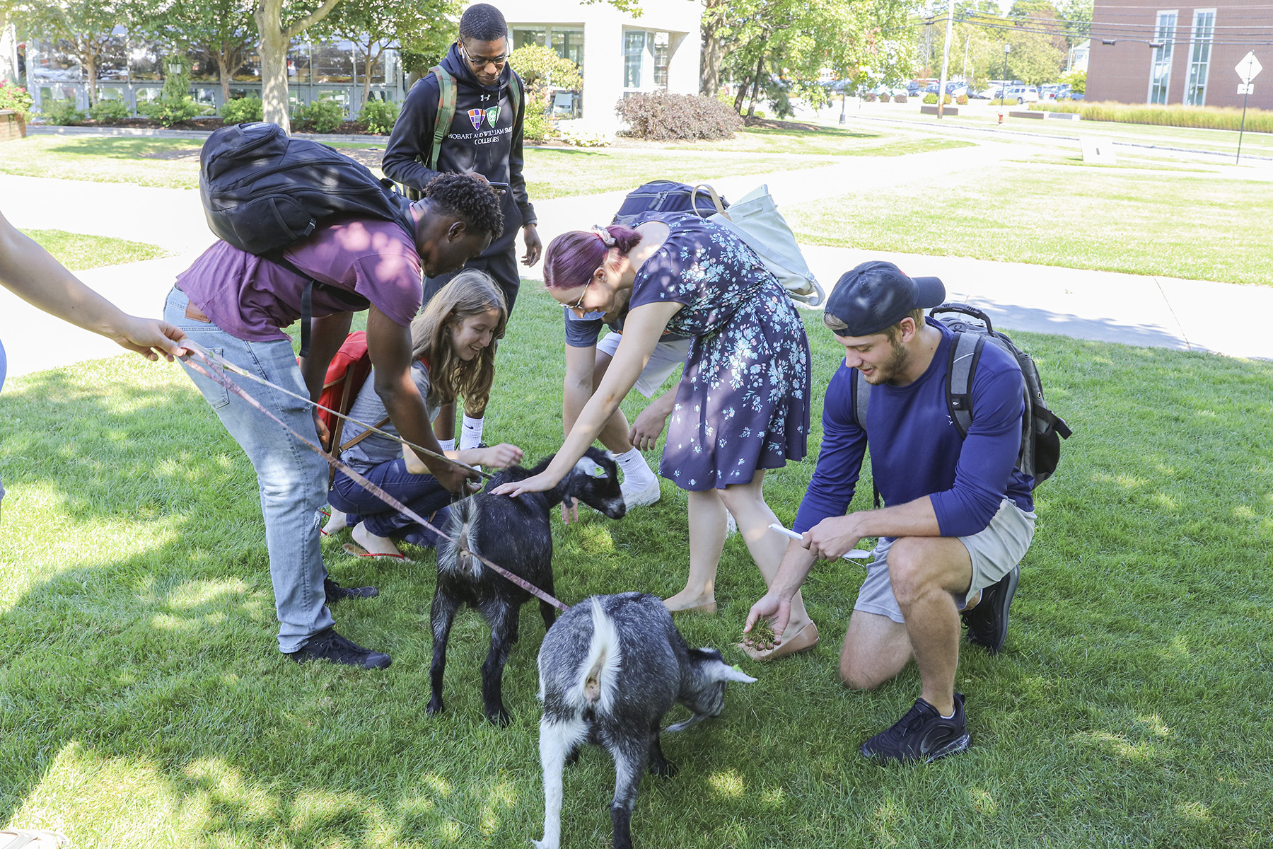 Goats on Campus-00112