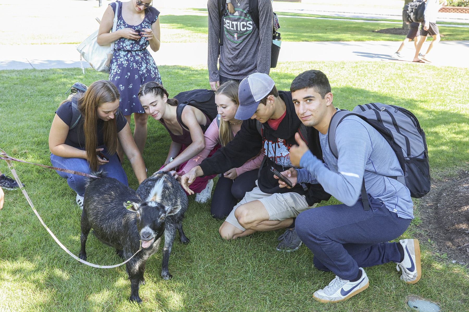 Goats on Campus-00191
