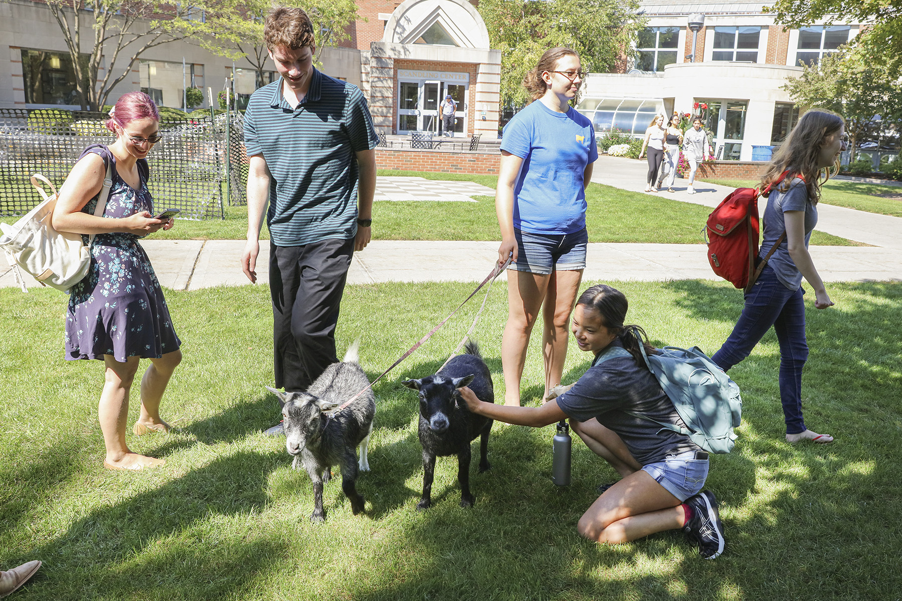 Goats on Campus-00214