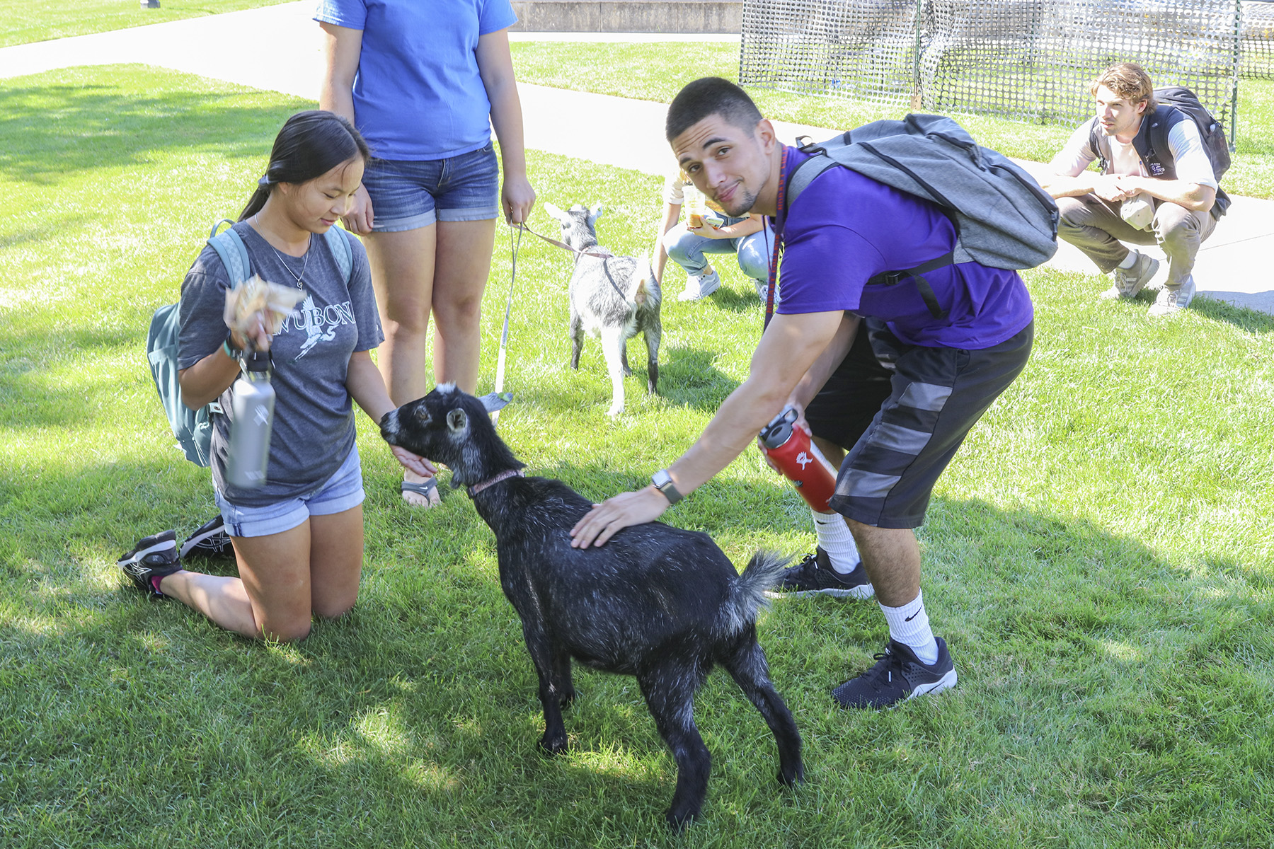 Goats on Campus-00239