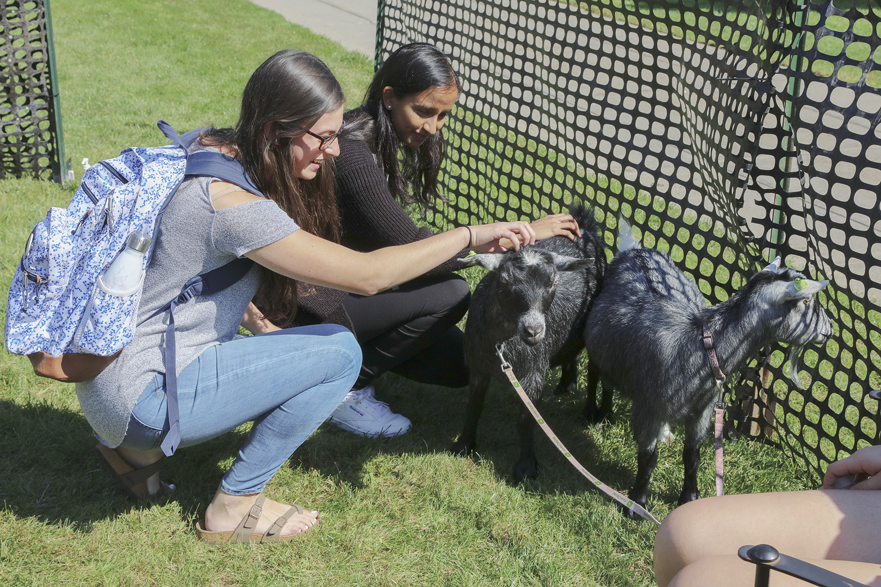 Goats on Campus-00387