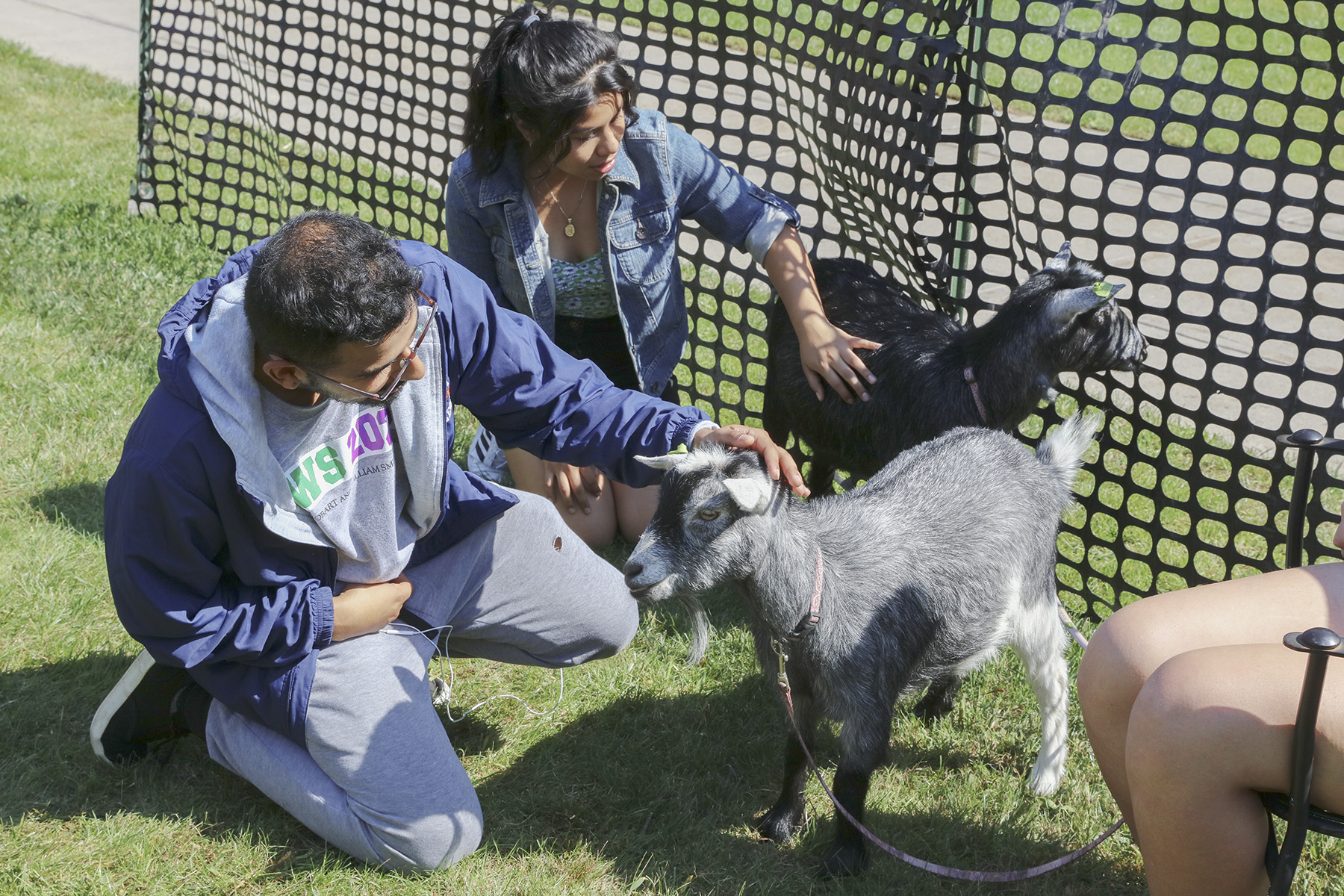 Goats on Campus-00398