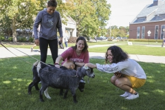 Goats on Campus-00046
