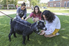 Goats on Campus-00092