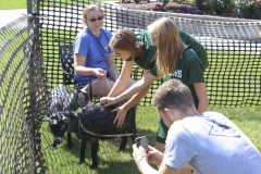 Goats on Campus-00266