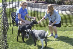 Goats on Campus-00276