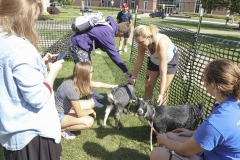 Goats on Campus-00296
