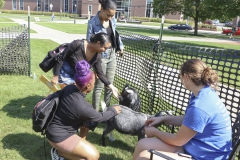 Goats on Campus-00328