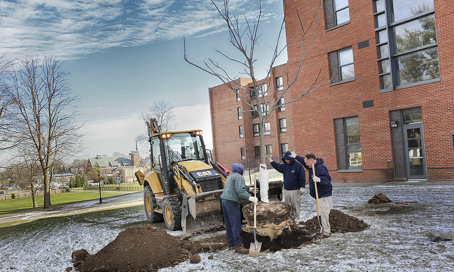 Members of Buildings and Grounds plant a new tree on the north side of Caird Hall. This is one of thirty nine trees planted so far since the beginning of the academic year.