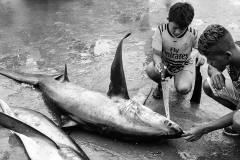 """Winner of the """"Black and White"""" category in this year's study abroad photo contest, Soren Anders-Macleod '18 takes a photo of shark finning in Puerto Lopez, Ecuador."""