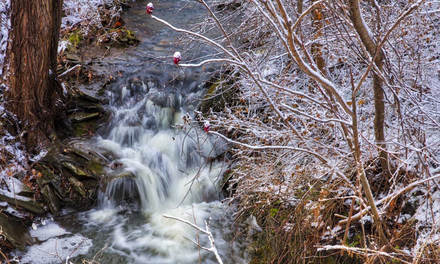 Amid a dusting of snow, a stream rushes through the woods in Trumansburg, N.Y.