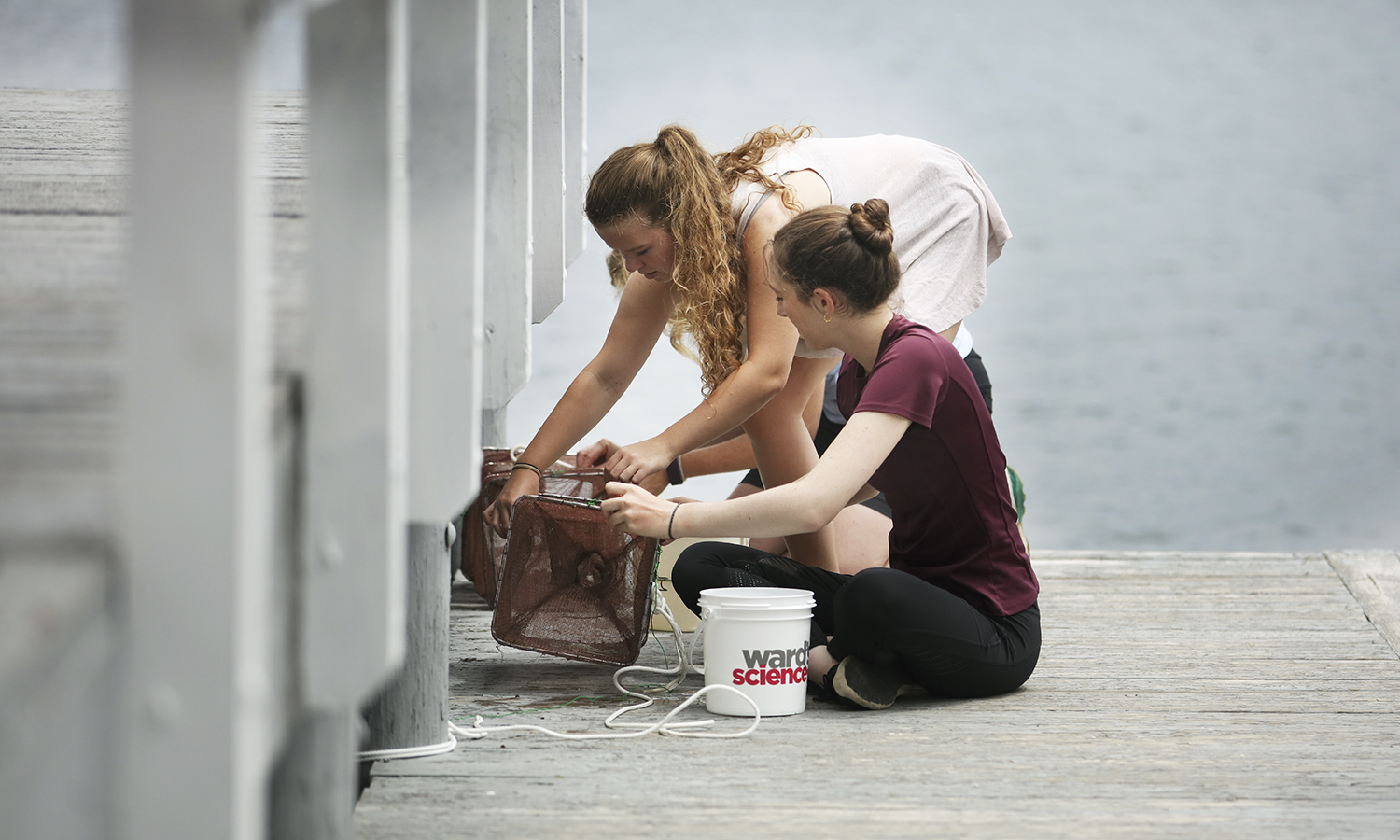 Students set a fish trap under the Bozzuto Boat House as part of their summer research with Director of Introductory Laboratories Susan Cushman on Goby Fish.