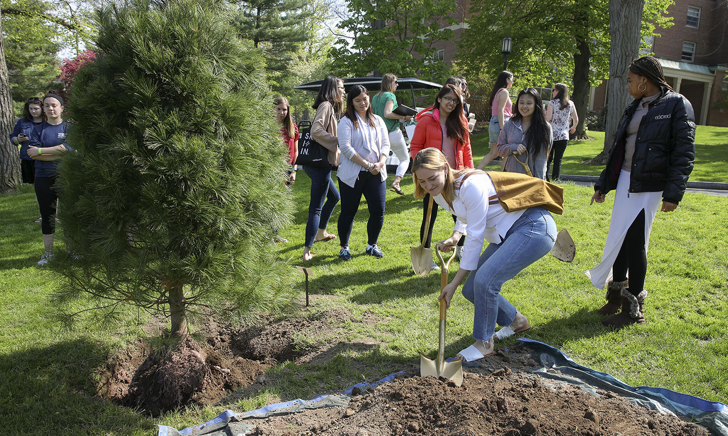 William Smith seniors take turns with the shovel as they plant their class pine tree.