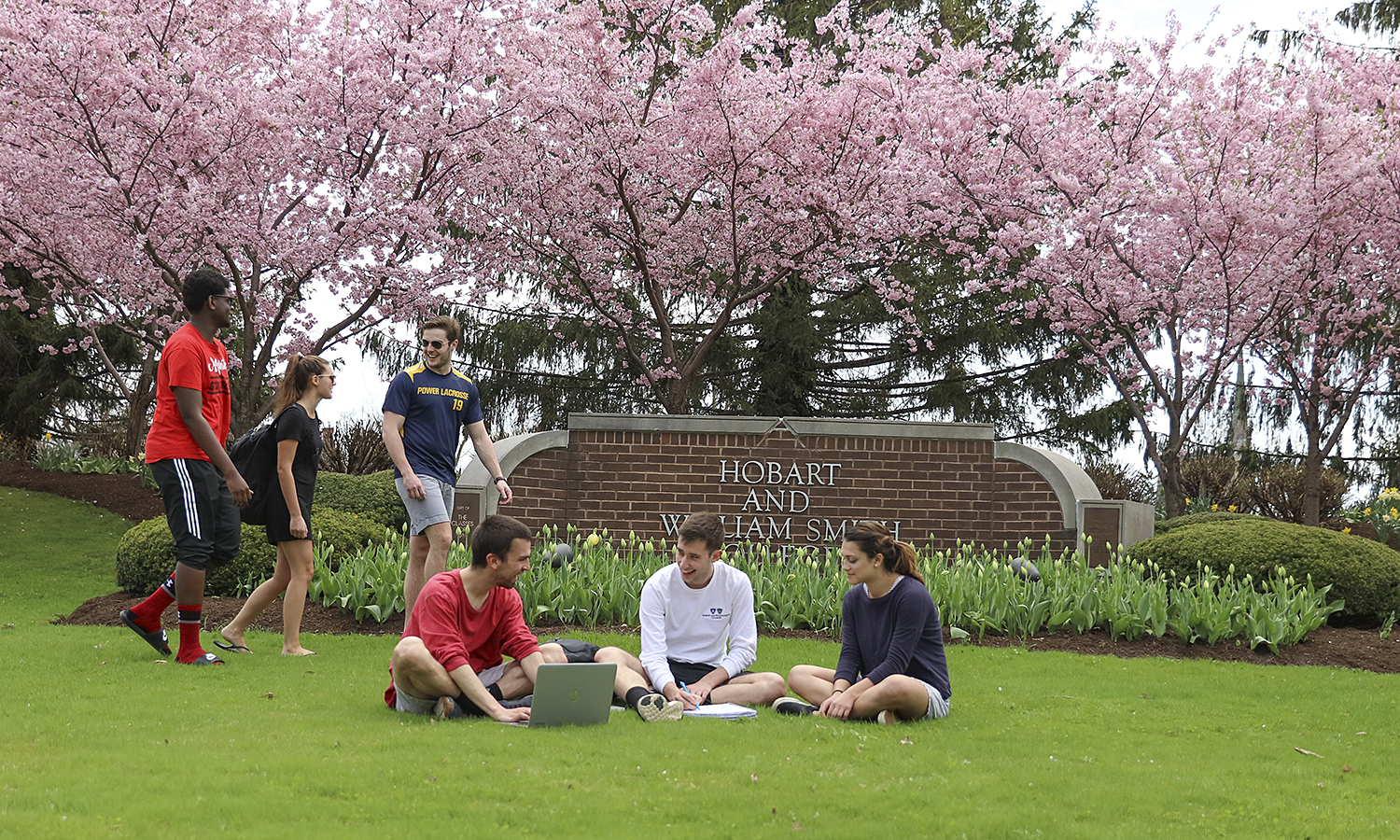 Trees are in full bloom on campus.