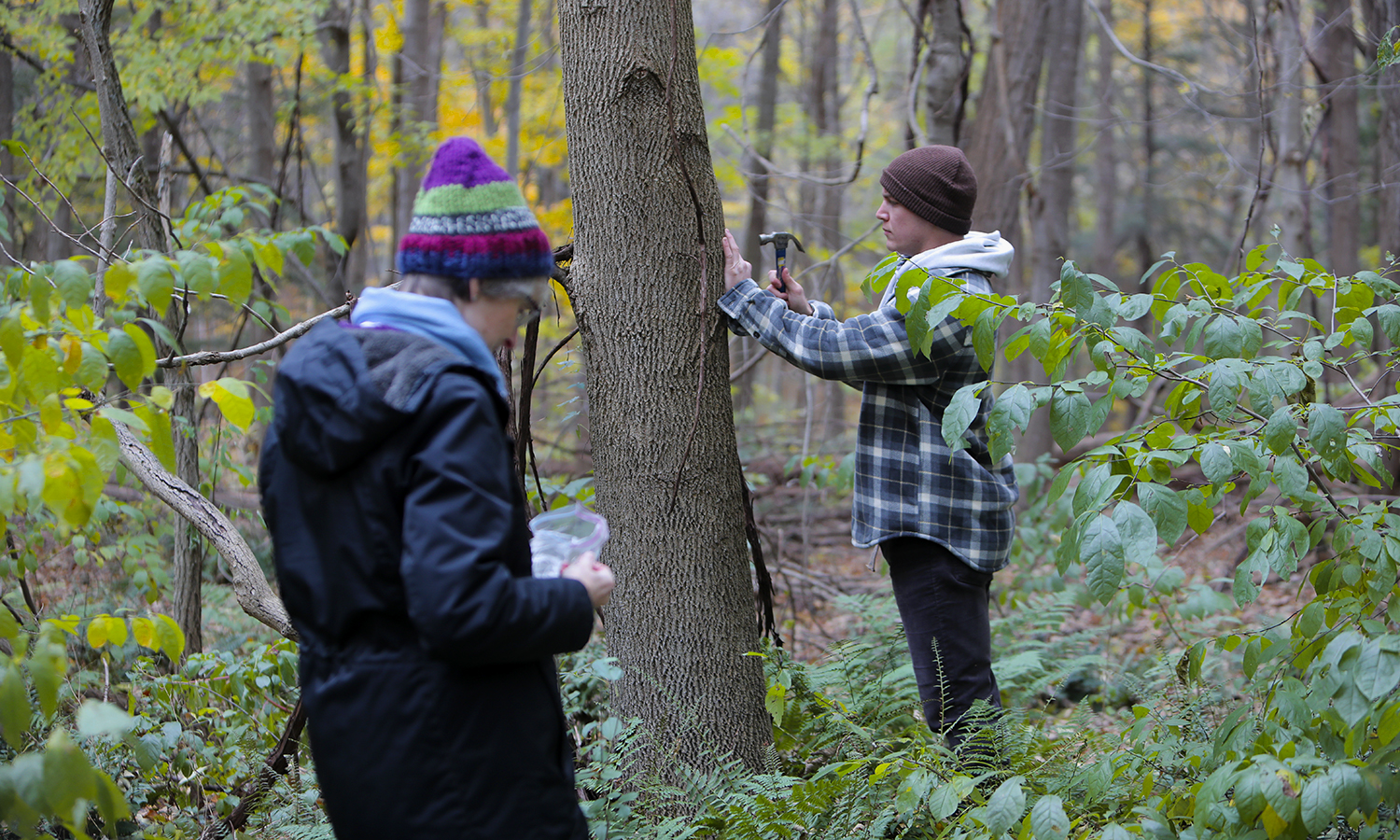 Professor of Biology Beth Newell looks on as Parke Schweiter '19 tags an ash tree.