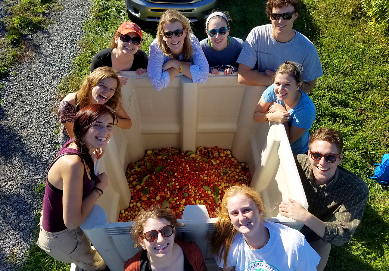 "Students from Assistant Professor of Environmental Studies Robin Lewis' ""Senior Integrative Experience"" class join Hobart alum Victor Pultinas '08 harvesting crab apples at the Cornell Agricultural Research Station."