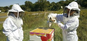 Emily Kelly 'X and Hannah Wood 'X perform a hive check on a bee colony at the HWS Fribolin Farm.