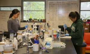 Charmaine Chung '19 and Ashton Ariola '21 work in Associate Professor of Chemistry Kristin Slade's lab doing enzyme studies to gain insight about the downstream implications in aging and disease.