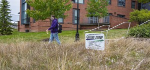 """A """"No Grow Zone"""" on campus provides habitat for pollinators and reduces carbon emissions."""